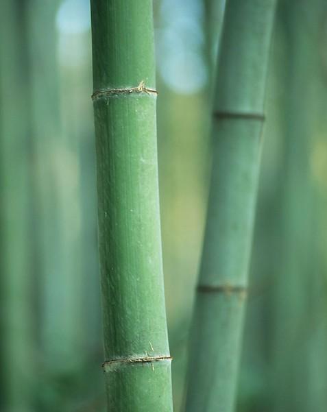密度与厚度对重组竹内应力的影响