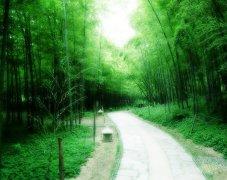 楠竹的分布,以及开发