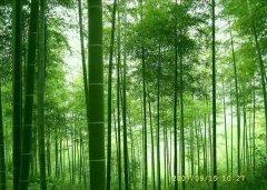 竹集成材产业