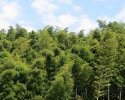 竹材,环保板材,绿色板材